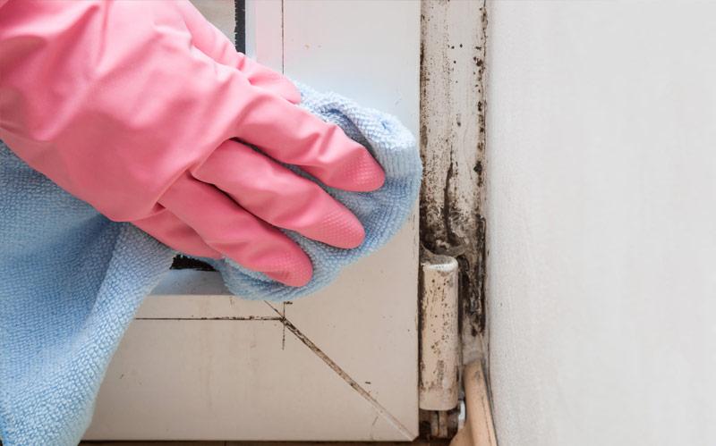 "Say ""No"" To Biocides: No Need To Kill Mold | GOT MOLD?"
